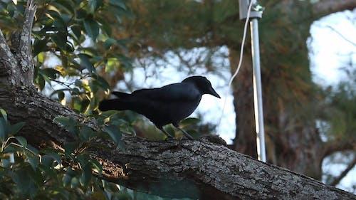 Black Bird Standing on Tree Branch