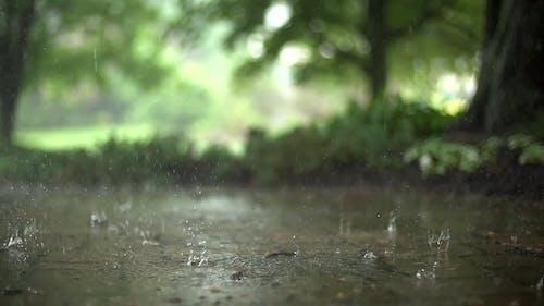 Slow Motion Video of Rain Drops