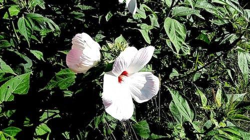 Beautiful Hibiscus Flower Close up