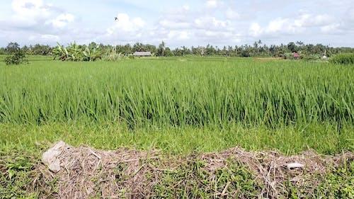 Tropical Farmland