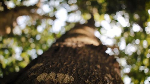 Close-Up Shots of Tree Trunks