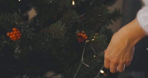 A Person Putting Christmas Lights