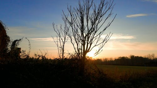 A Silhouette of a Leafless Tree During Sunset