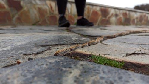Caterpillars Crawling in Line