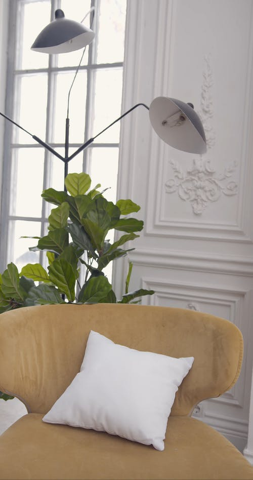 Lamp and Indoor Plant beside the Sofa Chair