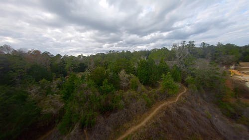 Aerial Footage of the Forest