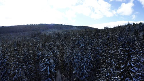 Drone Shot of the Snow Covered Trees