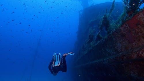 A Scuba Diver Surveying A Sunken Vessel