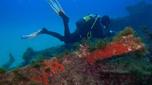 A Diver Surveying Corals Growth Underwater