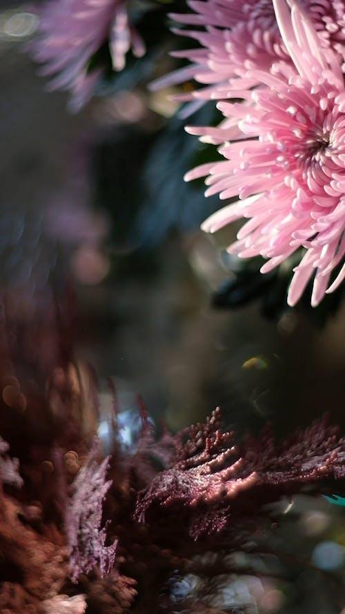 Close Up View of a Pink Gerbera