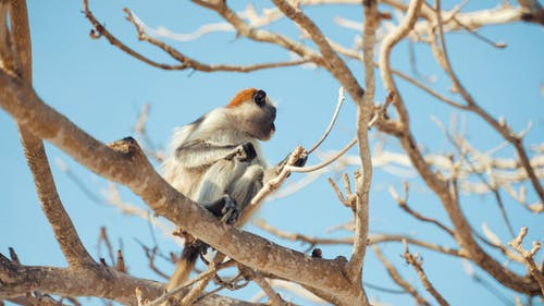 Monkey on Tree Branch Foraging for Food