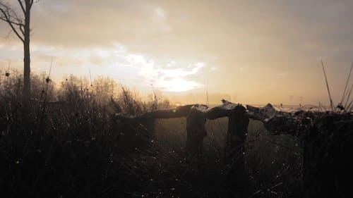 Misty Surroundings In Early Morning