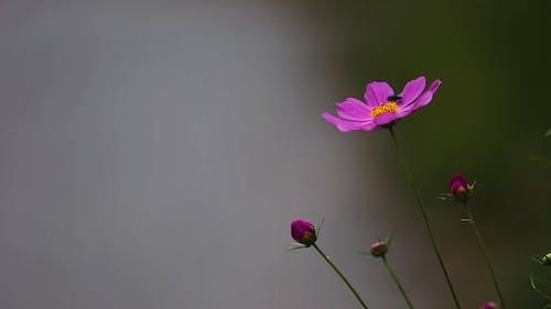 Macro Shot Of Little Purple Flowers