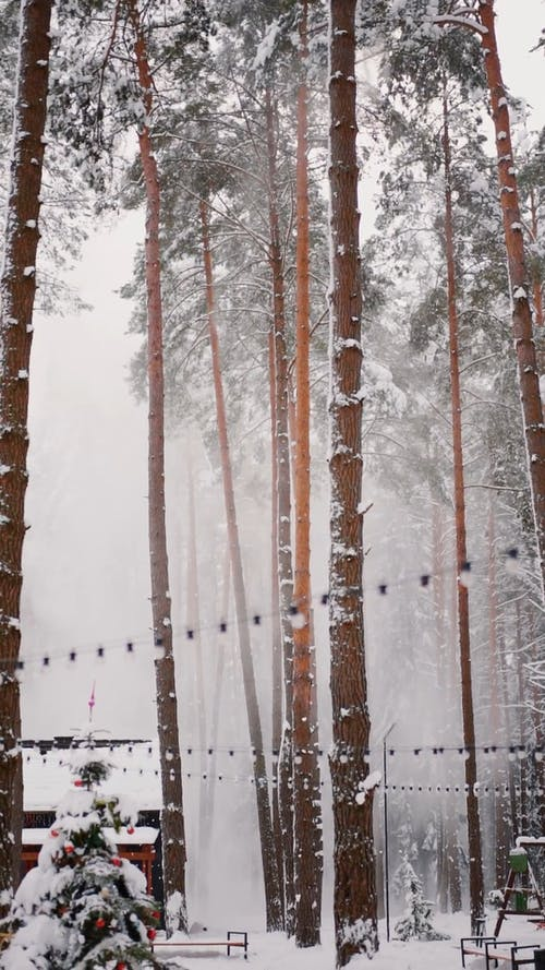Snowfall in a Forest