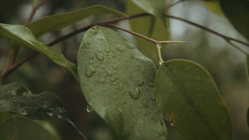 Close Up Shot of Leaves with Water