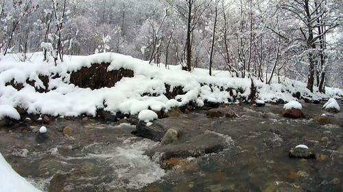 Flowing River in an Icy Forest