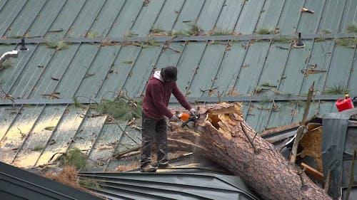A Man Cutting a Tree Bark