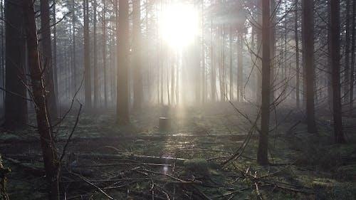 Sun Light Shining in Misty Forest