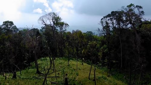 Aerial Footage Of Forest In The Mountains