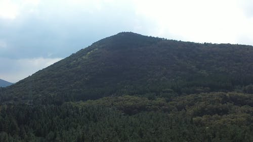 Forest Covered Hill