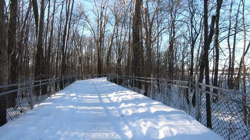 Tracking Shot of Woods Covered with Snow