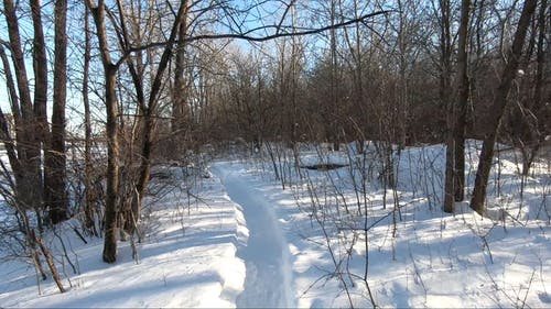 Video of a Walking Person in Forest