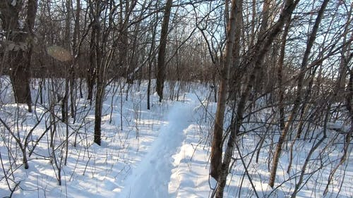 Person Walking Through the Woods in Winter
