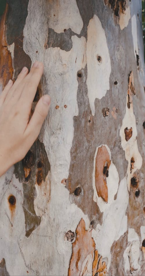 Person Touching Tree Trunk