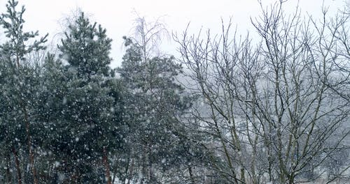 Video of Snow Falling