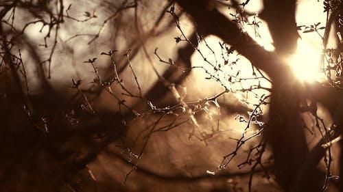 Sun Light Trough the Branches