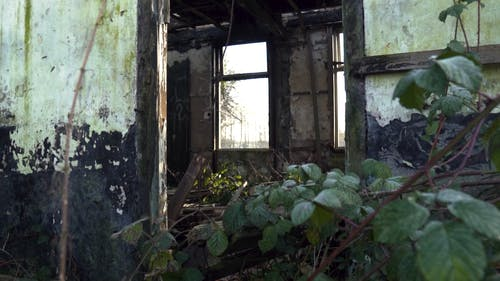 Abandoned House with Plants