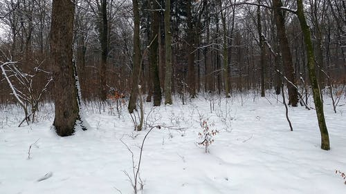 Person Walking in the Winter Forest