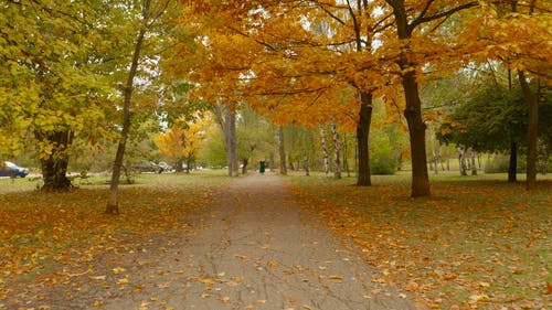 Fallen Leaves at the Park