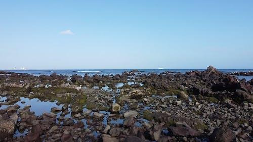 Birds on a Rocky Beach
