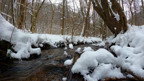 Snow Capped Trees and Flowing River