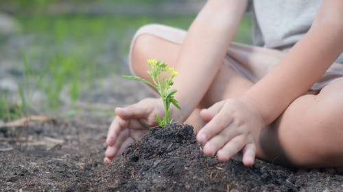 A Child Planting on Field