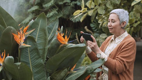 Woman Taking Picture of Garden Plants