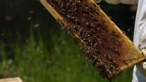 A Person Harvesting Honey