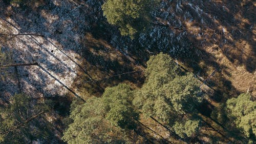 Drone Flying Above a Forest