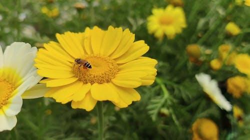 Bee Feeding on a Flower