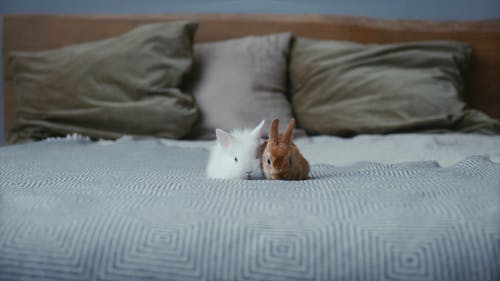White and Brown Rabbits in the Bed