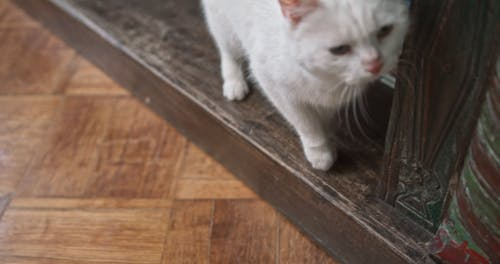 A White Cat Rubbing Itself On The Book Shelf
