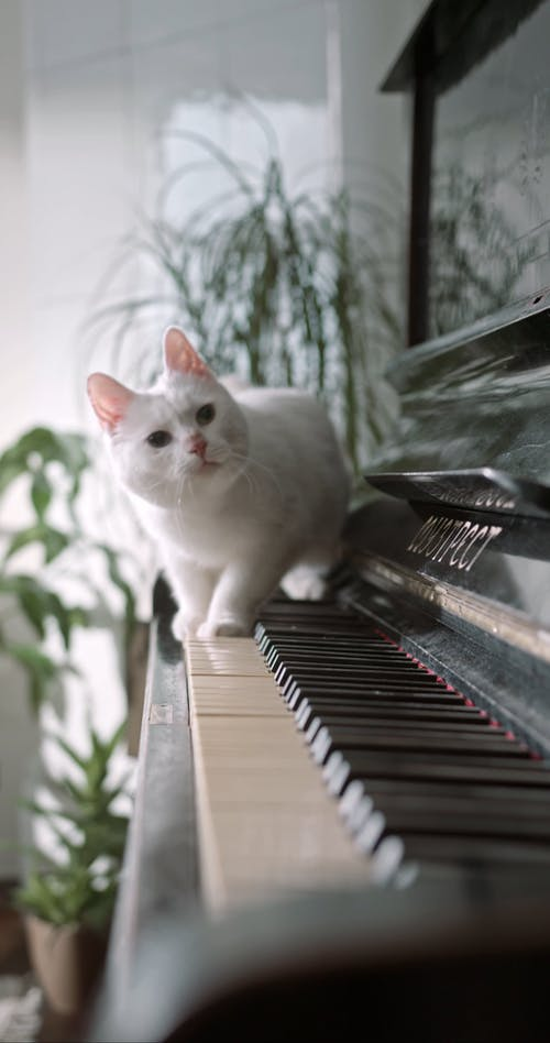 A Cat Jumping Away From The Piano Keyboard