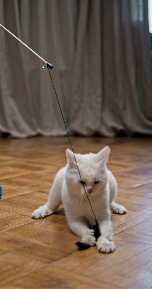 Playing Bait With A Cat