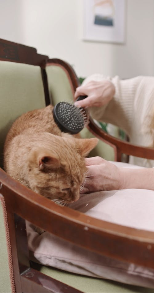 A Person Grooming A Cat