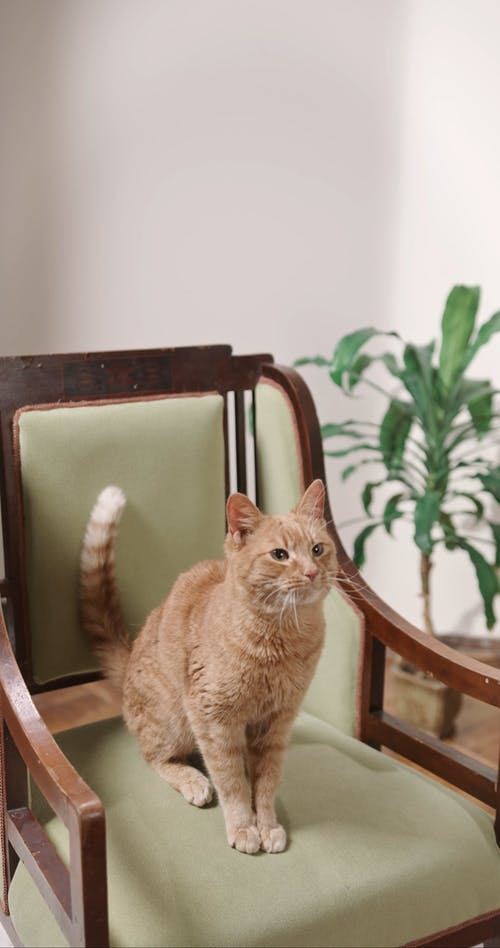 A Cat On Top Of A Chair