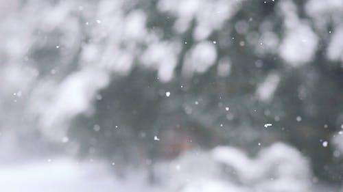Falling Snow in Daytime