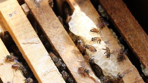 Bees Making Honeycomb