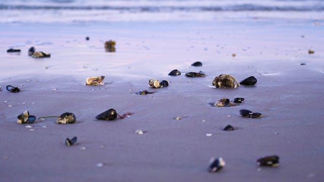 Beach Ocean Estate Costa