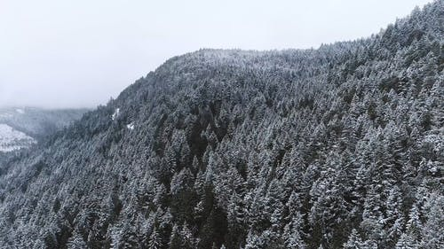 Aerial Footage of a Snow Covered Trees in the Coast Mountains
